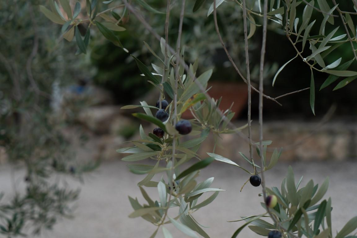 Olijven-2.jpg