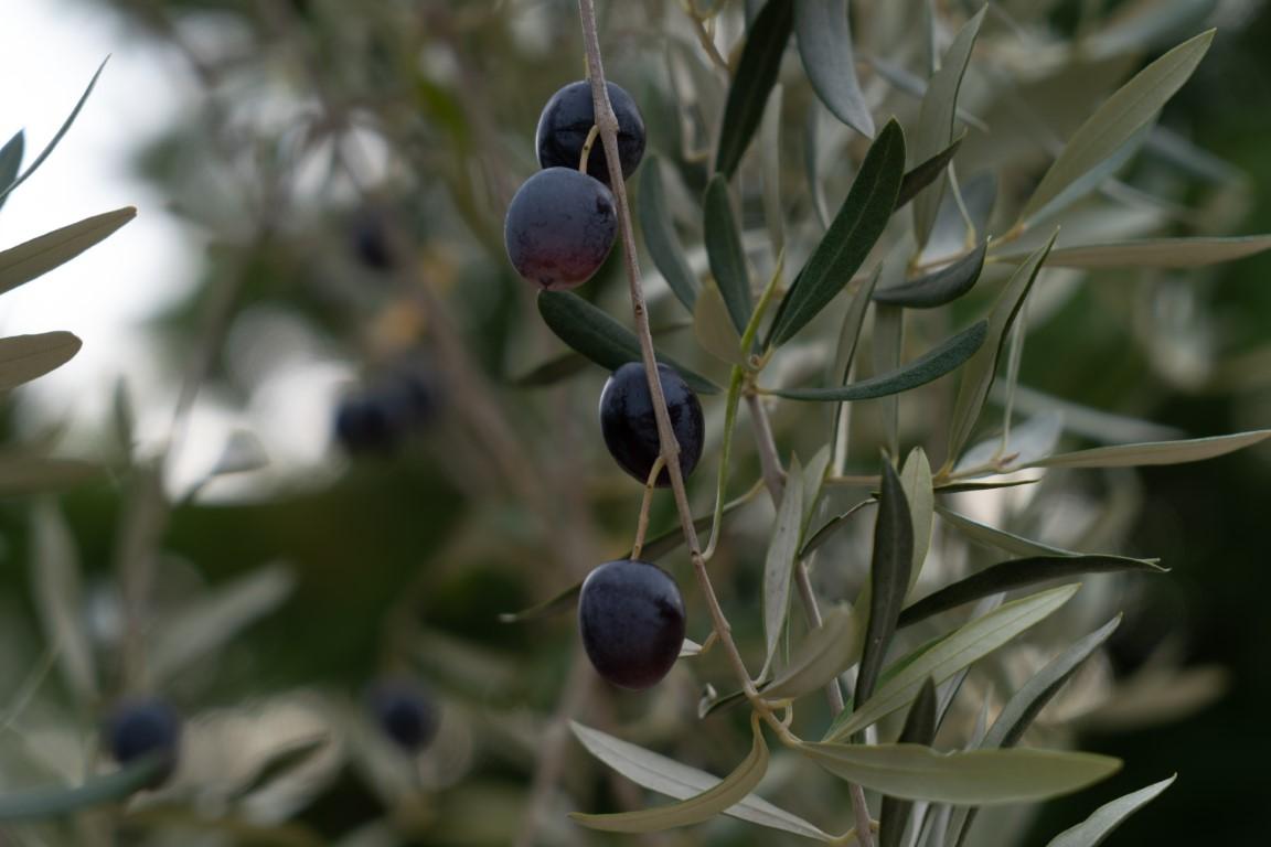 Olijven-8.jpg